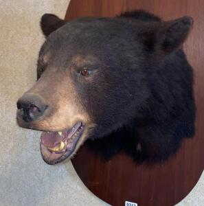 Black Bear Mount