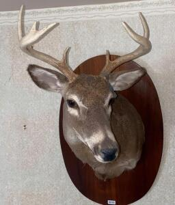 7 Point Whitetail Chest Mount