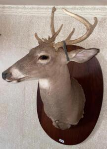 6 Point Whitetail Chest Mount