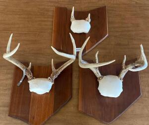 Lot of 3 Antler Mounts